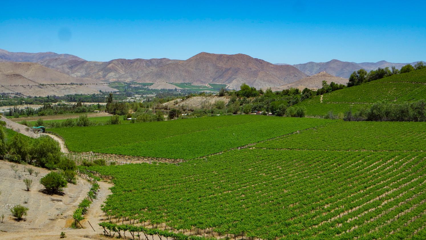 Venta de fundo 36 hectáreas, comuna de Vicuña, valle de Elqui